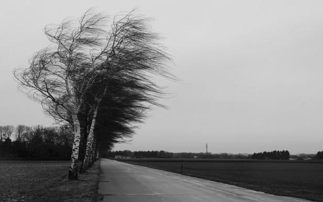 copac furtuna